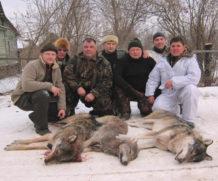 Охота на волка.