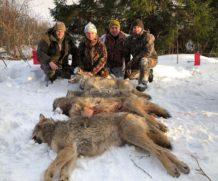 На волка в Калмыкию.