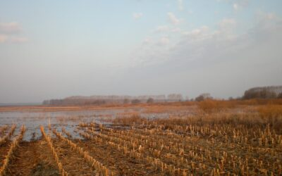 Первая охота на гуся в республике Беларусь.