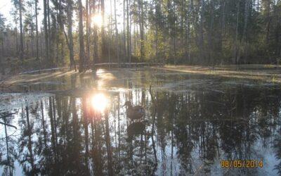 Охота на север Костромской: