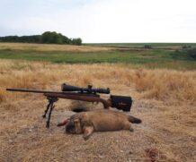 Сурок-байбак, впечатления от охоты.