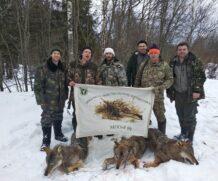 Волки в Ярославской есть…