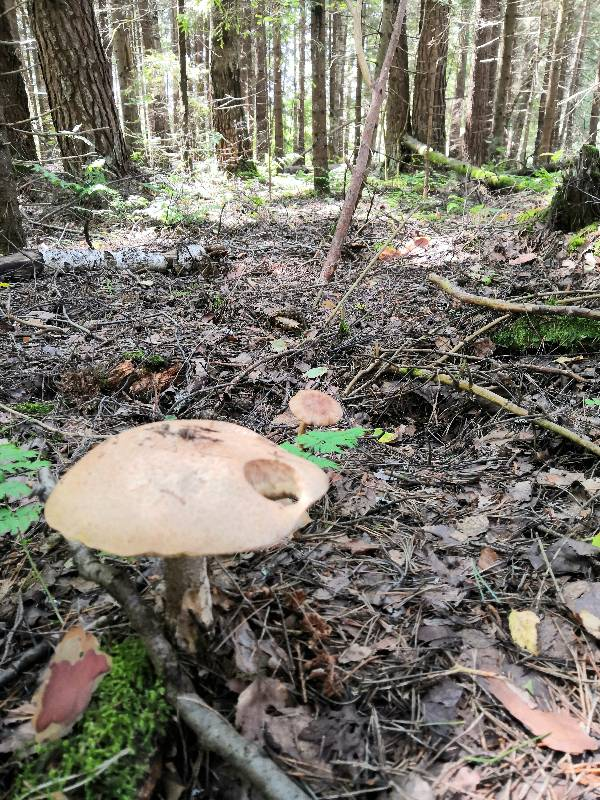 Все в лес! Белые наступают :))