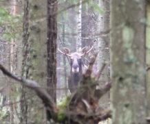 Случай на охоте…