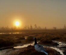 Амулет карельского болота.