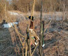Моя первая весна, снова на охоту…