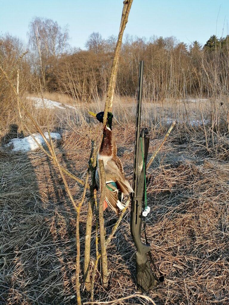 Моя первая весна, снова на охоту...