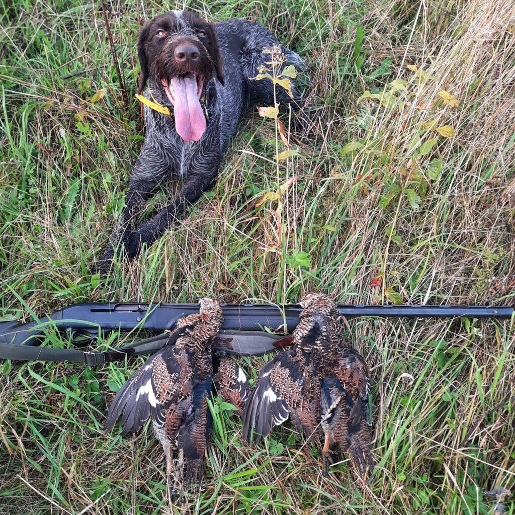 Собака снова утянула на охоту....